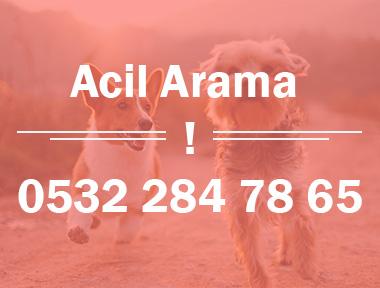 acil-ara1jpg