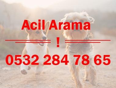 acil-ara2