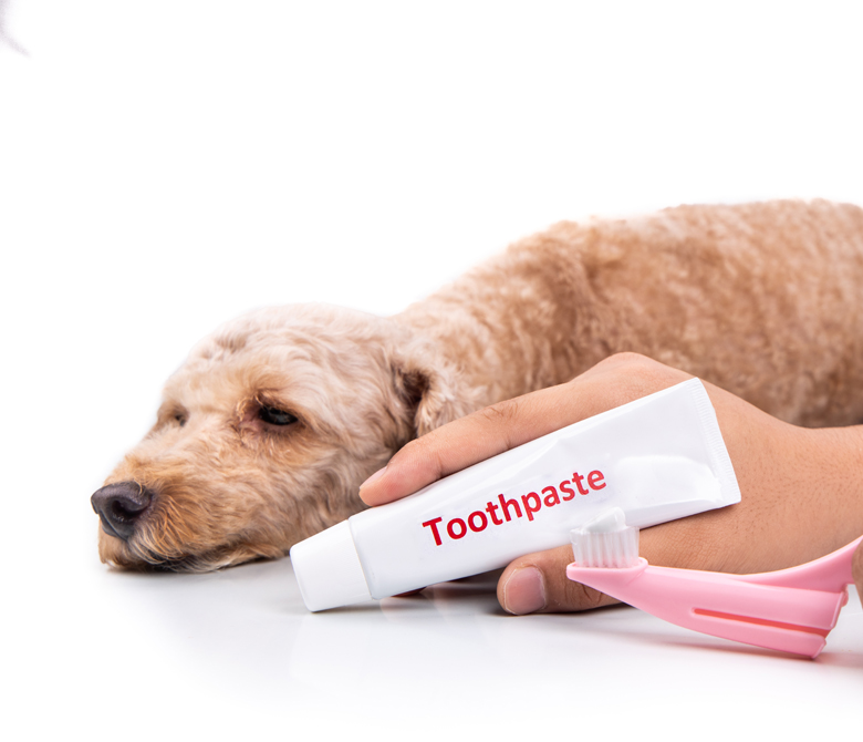 Hand holding toothbrush and toothpaste with pet dog in backgroun
